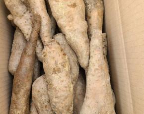 [영주장터농원] 참마,산마 10kg 65000 {실중량 10kg} 선물용