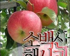 [파머story] 햇 햇사과 선홍 홍로 요과 5kg 17~18과 내외 선물용 정품 사과