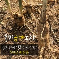 풍기인삼 5년근 햇수삼 750g(7-8뿌리) 풍기금계농장 산지직송