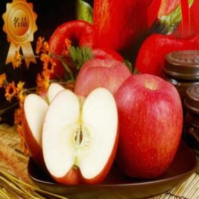 [우리가족사과]소백산 영주사과 5kg 11-14과 꿀부사사과