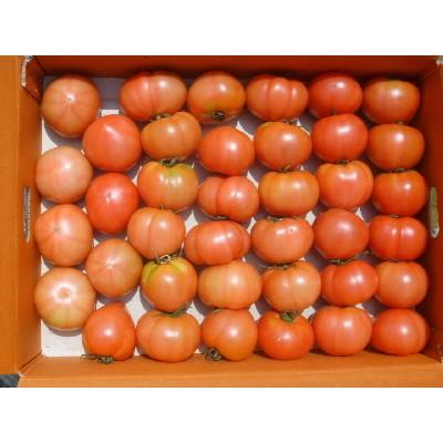 [초록농산] 싱싱완숙토마토 10Kg(50~60과내)