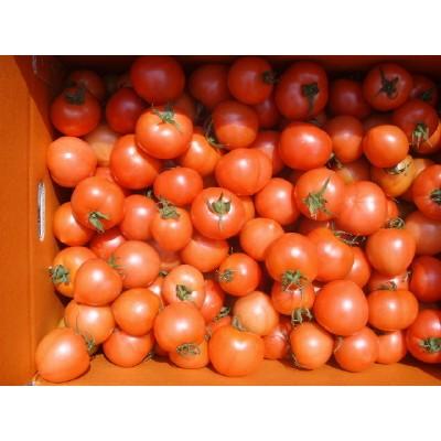 [초록농산] 싱싱완숙토마토 10KG(아주 작은 토마토))