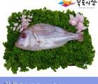 [죽도시장] 참돔(제수용생선) 36Cm-40Cm / 1마리 / 경북 동해안 최대 전통시장 죽도시장 특선 제수용 생선