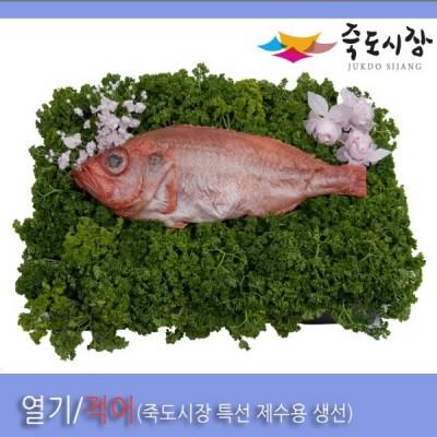 [죽도시장] 열기(제수용생선) 40Cm-45Cm / 1마리 / 경북 동해안 최대 전통시장 죽도시장 특선 제수용 생선
