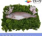 [죽도시장] 민어조기(제수용생선) 35Cm-39Cm / 1마리 / 경북 동해안 최대 전통시장 죽도시장 특선 제수용 생선