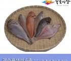 [죽도시장] 제수용생선 6종 Set(참돔, 민어조기, 적어, 침조기, 우럭, 가자미) 각 1마리 / 경북 동해안 최대 전통시장 죽도시장 특선 제수용 생선