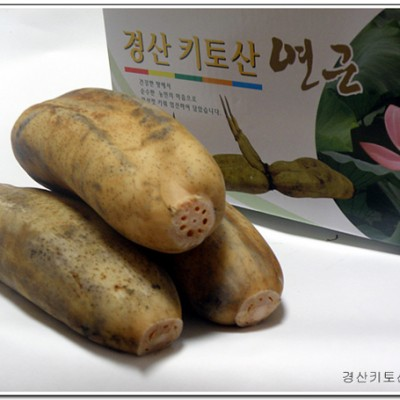 [경산키토산 연근농장] 2019년 무농약 햇연근 (씻은연근 2kg)