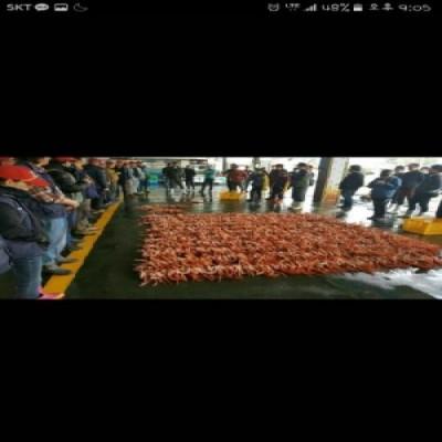 [봉양수산(봉양호)] 구룡포 대게 100% 국산 9.5cm~10cm 최소5마리부터