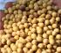 [에코파파 한마을팜] 냉콩국수 해먹기 좋은 백태(흰콩) 1kg