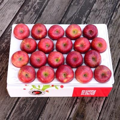 영주풍기사과농장 꿀맛사과 대용량 5kg 20~24과 가정용 흠집사과