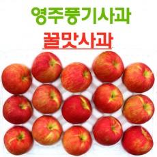영주풍기사과 꿀맛사과 대용량 10kg 34~42과 가정용 흠집사과
