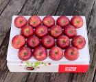 영주풍기사과농장 꿀맛사과 대용량 5kg 17~19과 가정용 흠집사과