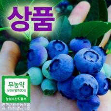 [성주블루베리농원] 무농약 블루베리 생과 상품 1kg