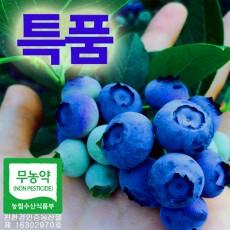 [성주블루베리농원] 무농약 블루베리 생과 특품 1kg