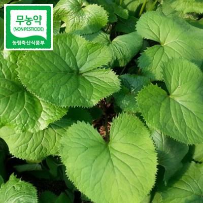 [속리산자연농산] 속리산 자연농산 무농약인증 곰취나물 2 Kg