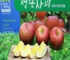 [세연농원] 청송사과 껍질째먹는 얼음골 꿀 부사 가정용 선물용5kg 10kg