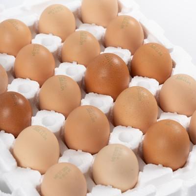 (은하수농장) 재래토종닭 방사유정란 (60개)