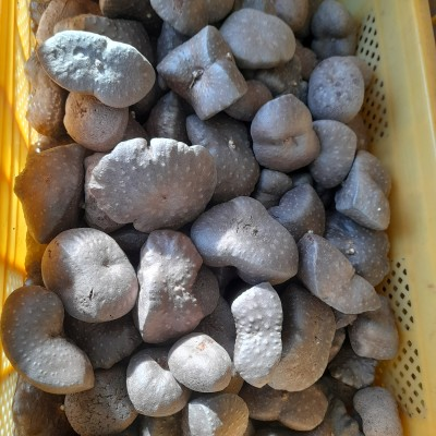 국내산 열매마 1kg..12000원 판매
