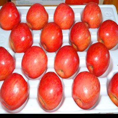 [청송솔뫼농원] ★GAP인증, 이력추적관리상품★ 껍질째먹는사과 꿀부사8kg(30~34과)
