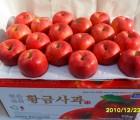 [옹점사과작목반]★친환경저농약 껍질째먹는사과★황금사과 부사 5kg (17~19과)