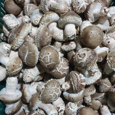 [경주청운농장] 생표고버섯 1kg 친환경