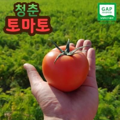 GAP 완숙 토마토 5kg