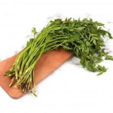 생야채로 먹는 신선한 청도미나리 4kg(벌크)