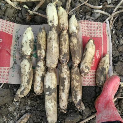 [알찬연근팜] 무농약 세척연근, 슬라이스연근 500g