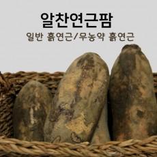 [알찬연근팜] 무농약 햇연근 1kg, 실속형연근 2kg