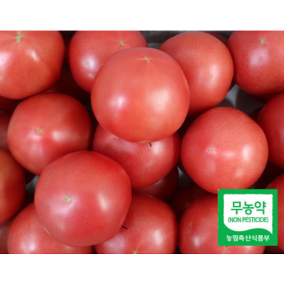 친환경 TY기찬토마토5kg(20~30과)