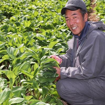 [해달뫼 농장]잎만수확 生명이나물(산마늘)2kg