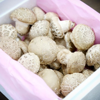 [문경백화버섯] 문경 송화 송화고 고기버섯 일반형 1kg
