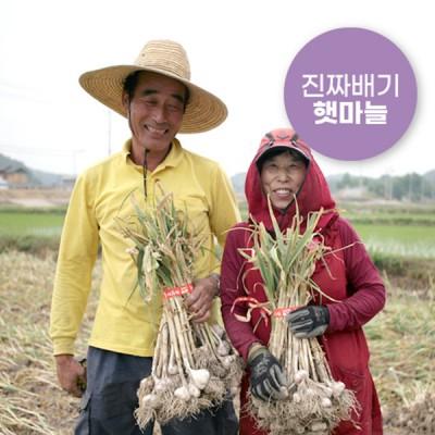 2020 의성한지형마늘/의성토종마늘(예약주문)