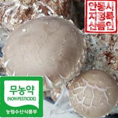 생표고버섯 1kg, 건표고버섯 100g