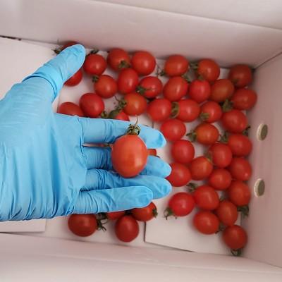 [대우농장] 친환경 gap 대추방울 토마토 3kg