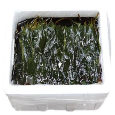 [농업회사법인(주)독도무역]산마늘 명이 잎 15kg
