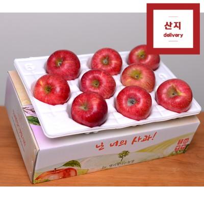 [추석선물 특가상품] 아삭아삭한 빨간 햇사과 3kg 8~10과(중상~대과) 정품