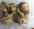 [에코파파 한마을팜] 열매마(하늘마) 1kg