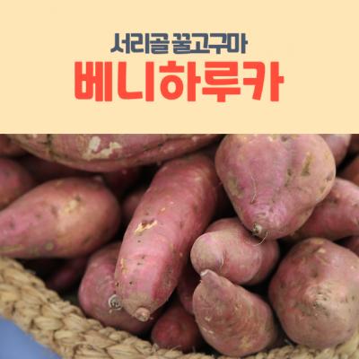 ★이웃사촌★ [내서서리골마을]꿀고구마 베니하루카 1Kg*3봉(3Kg)