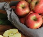 [그랑농원] 영주 햇 꿀사과 부사흠집 2.5kg 소과(10-11과)