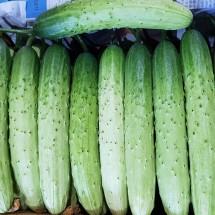 [기태네농장] 백다다기오이 특상품, 공품 25개 50개