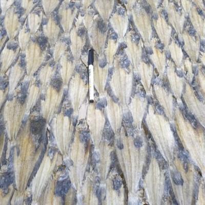 웰빙건어물 건물가자미소 건미주구리소 한장 대략80~75cm 850g내외 마른가자미