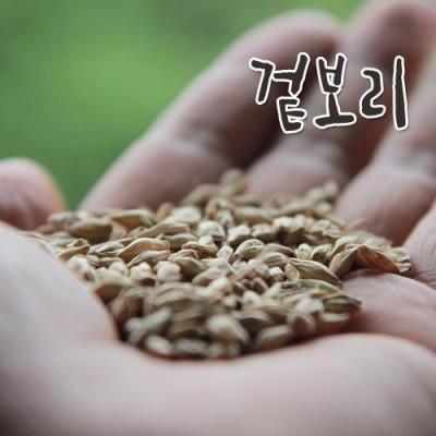 [소화농장] 2019년 햇 겉보리 1kg (엿질금 보리싹 보리차)