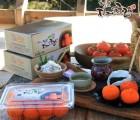 [청도원감] 꿀 꼬마반건시 1kg 곶감 말린과일
