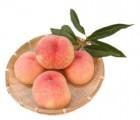 나혼자 잘~산다 함초롬 달콤한 햇복숭아 4.5kg(23-25이내)