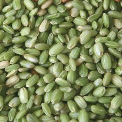 [쌀아지매] 생명의쌀 찰녹미 1kg (우렁이농법)