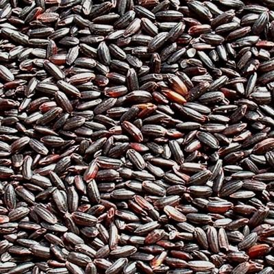 쌀아지매 2020년국내산 찰흑현미 검정쌀 검은쌀 찰흑미1kg