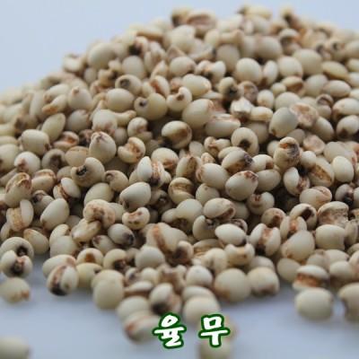[쌀아지매] 햇 율무 1kg