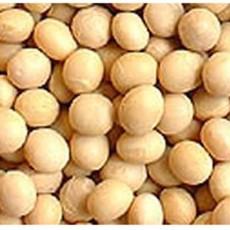 쌀아지매 2020년국내산 메주콩 대두 두부콩 흰콩 백태/소 1kg