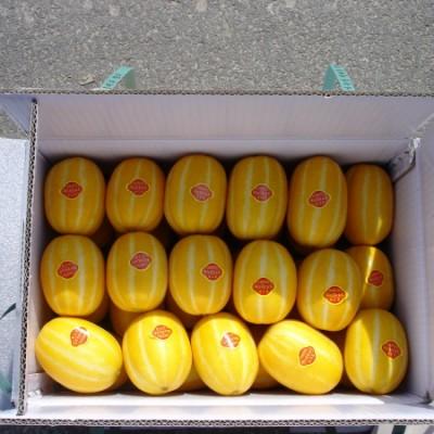 성주초전참외 10kg(25-39과)특품